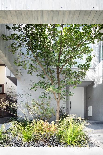 木を抱く壁をくぐり抜けるアプローチ 奥に玄関扉が見える